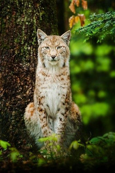 Агрессивность диких животных по отношению к человеку