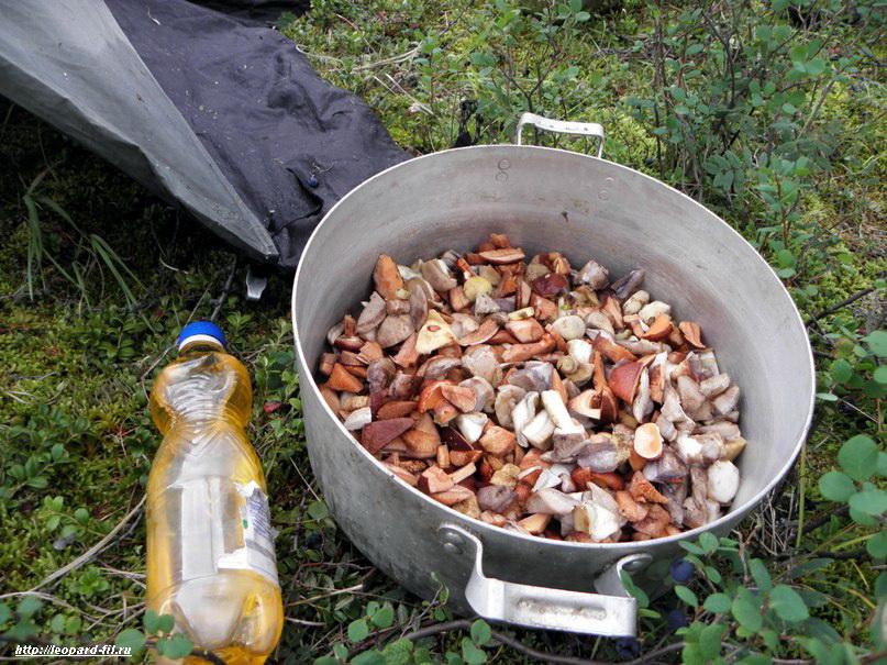 Стоит ли собирать и есть грибы в походе?